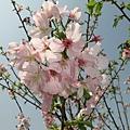 天元宮IMG_7022 20110313.JPG
