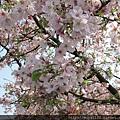 天元宮IMG_6899 20110313.JPG