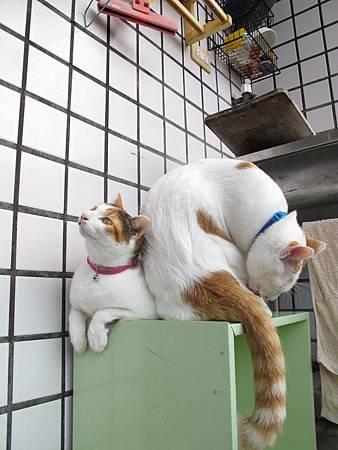 20110120-貓跟陽光絕配-104.JPG
