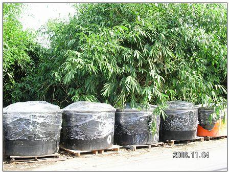 (8) 路邊的筍醬缸.jpg