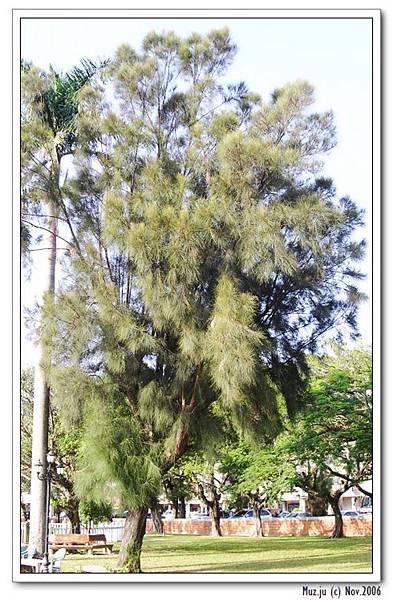 (11) 據說生火很好用的樹.jpg