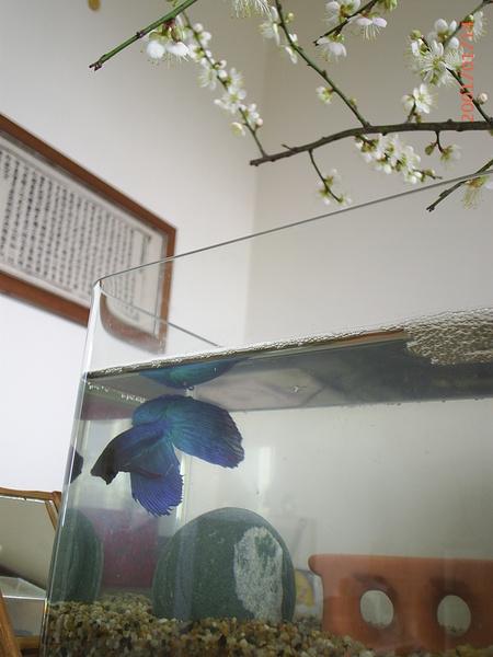 20070114 (6).JPG