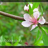 20080315-菜園風景-07.jpg