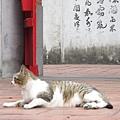 20110502-初訪林氏宗廟-033.JPG