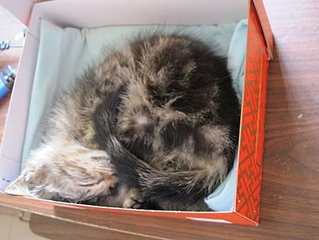 20110530-小貓太陽餅-044.JPG