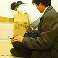 20081214-虎斑小貓三兄弟-03.JPG