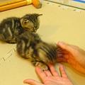 20081214-虎斑小貓三兄弟-15.JPG