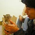 20081214-虎斑小貓三兄弟-17.JPG