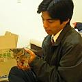 20081214-虎斑小貓三兄弟-20.JPG