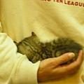 20081214-虎斑小貓三兄弟-27.JPG