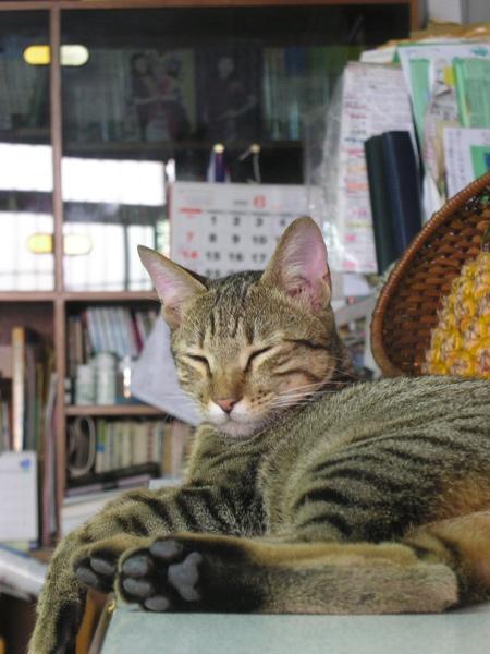 20090529-03-打盹的小虎-06.JPG