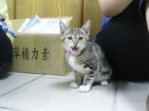 20090529-07-虎妹妹來訪-04.JPG