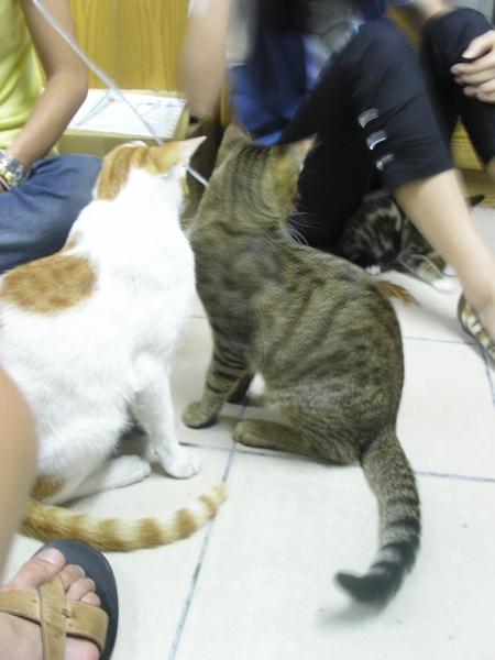 20090529-07-虎妹妹來訪-09.JPG