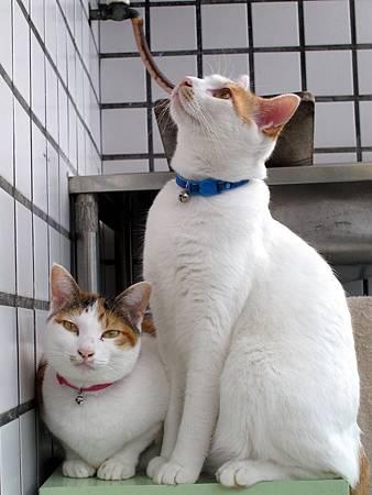 20110120-貓跟陽光絕配-058.JPG