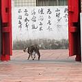 20110502-初訪林氏宗廟-035.JPG
