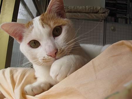 20110120-貓跟陽光絕配-010.JPG