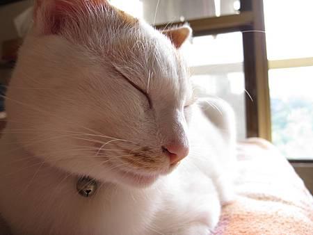 20110120-貓跟陽光絕配-138.JPG