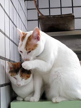 20110120-貓跟陽光絕配-059.JPG