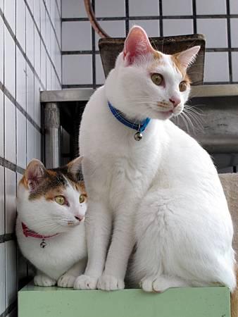 20110120-貓跟陽光絕配-060.JPG