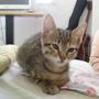 20090110-小虎到新家Day1-33.JPG
