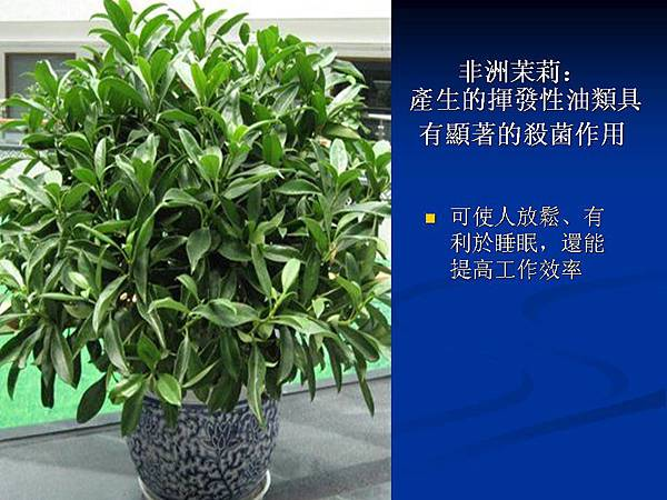 家庭常見植物的功效 (3).JPG