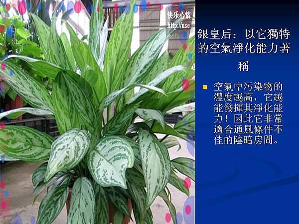 家庭常見植物的功效 (5).JPG