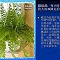 家庭常見植物的功效 (6).JPG