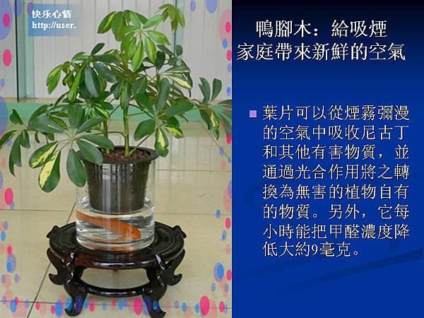 家庭常見植物的功效 (7).JPG