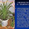 家庭常見植物的功效 (8).JPG