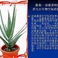家庭常見植物的功效 (9).JPG