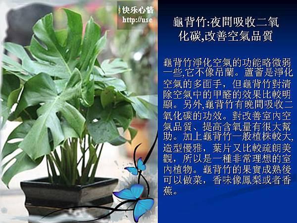 家庭常見植物的功效 (10).JPG