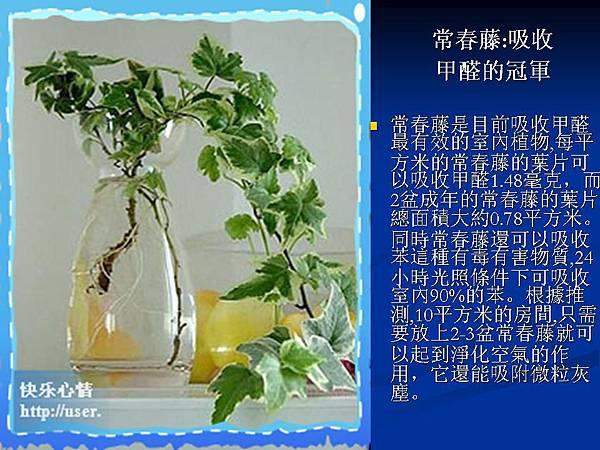 家庭常見植物的功效 (11).JPG