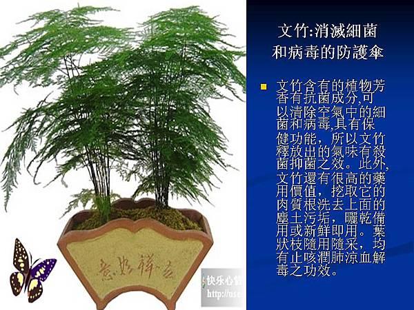 家庭常見植物的功效 (13).JPG