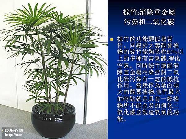 家庭常見植物的功效 (14).JPG