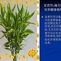 家庭常見植物的功效 (15).JPG