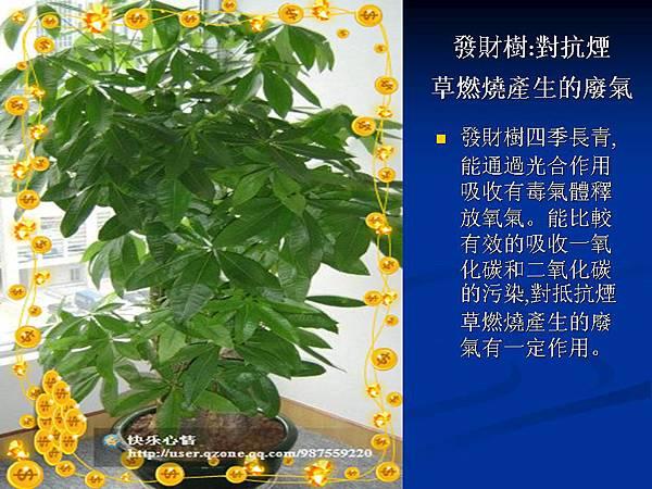 家庭常見植物的功效 (16).JPG