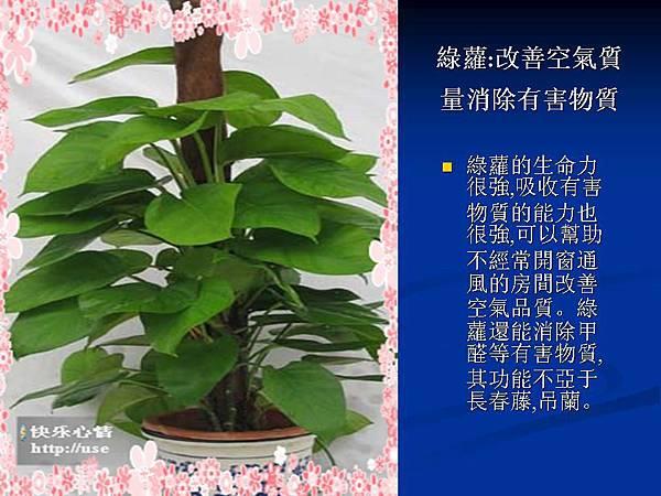 家庭常見植物的功效 (17).JPG