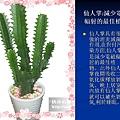 家庭常見植物的功效 (18).JPG