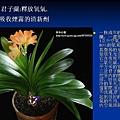 家庭常見植物的功效 (19).JPG