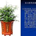 家庭常見植物的功效 (21).JPG
