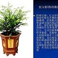 家庭常見植物的功效 (23).JPG