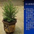 家庭常見植物的功效 (24).JPG