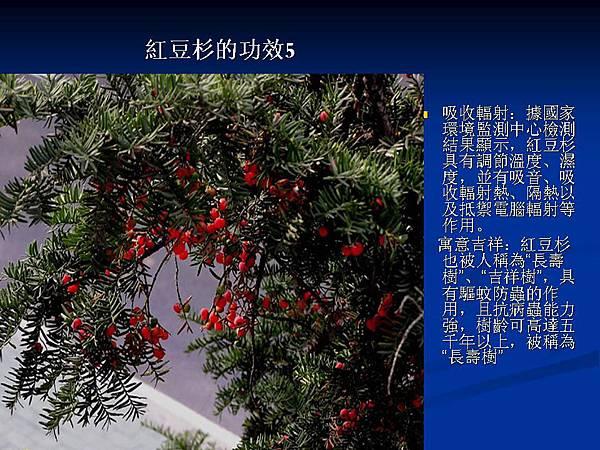 家庭常見植物的功效 (25).JPG