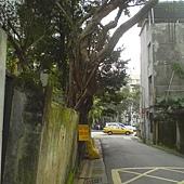 2012/2/13 新生南路巷內的大樹圍牆