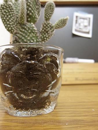 2012/2/22 現在夢中 雜貨商行-haeven送的小兔玻璃杯