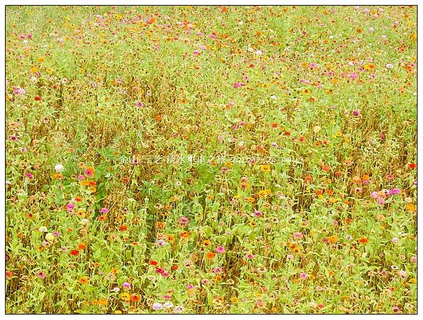 day3路邊的野花只可以看