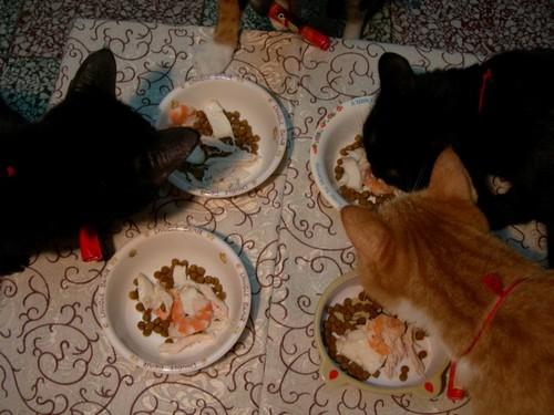 貓咪吃年夜飯囉01.jpg