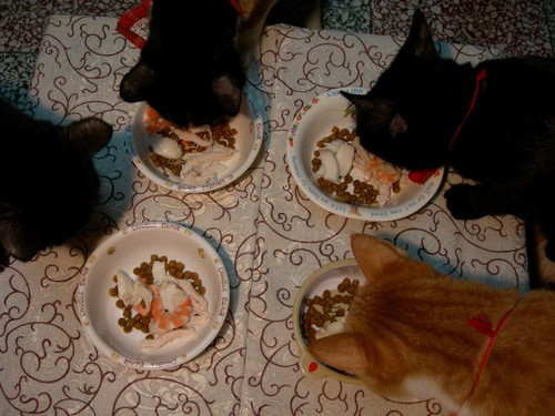 貓咪吃年夜飯囉02.jpg