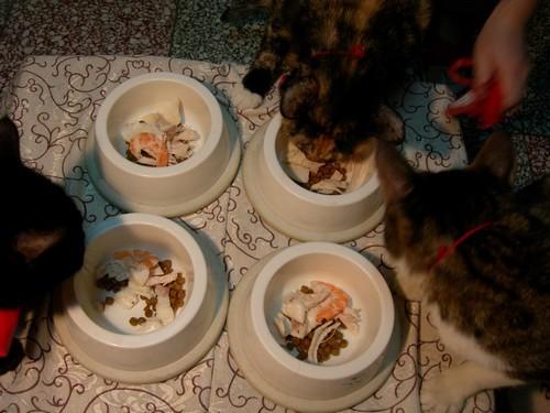 貓咪吃年夜飯囉04.jpg