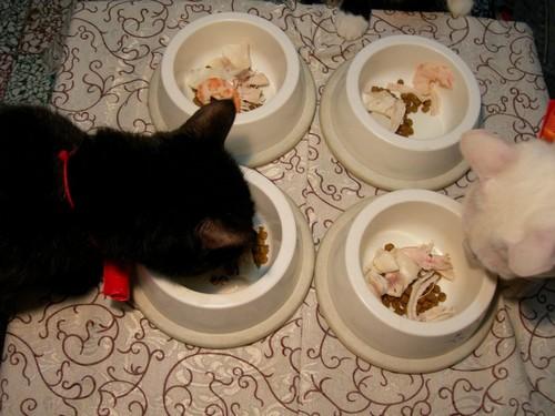 貓咪吃年夜飯囉05.jpg
